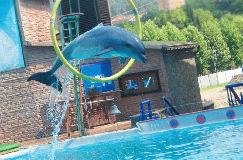 Дельфинарий Акватория в Адлере цены отзывы фото Otelrus