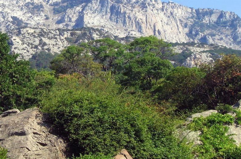Природные заповедники Крыма