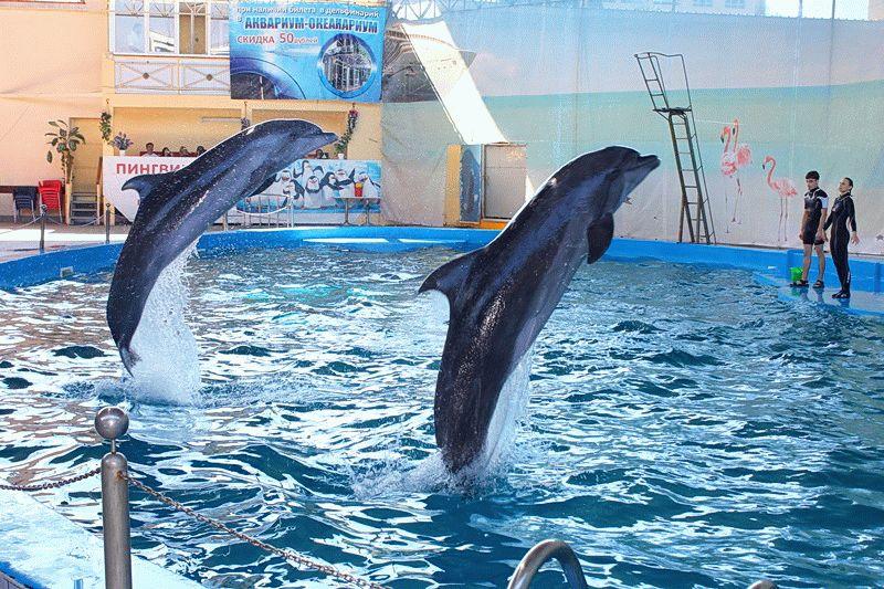 Дельфинарий Морская звезда