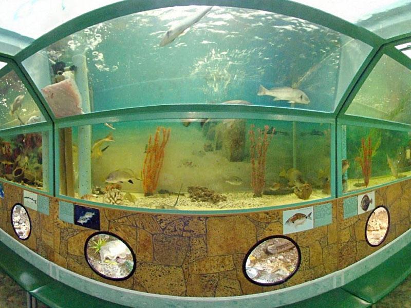 Морской аквариум «Батискаф» в Анапе