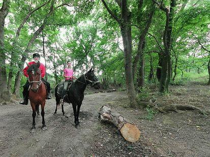 Конные прогулки в Сукко