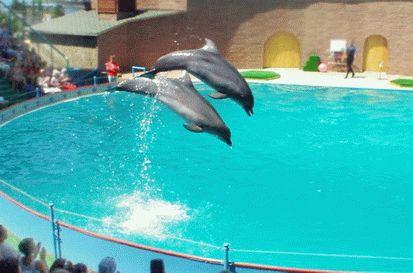 Дельфинарий Акватория