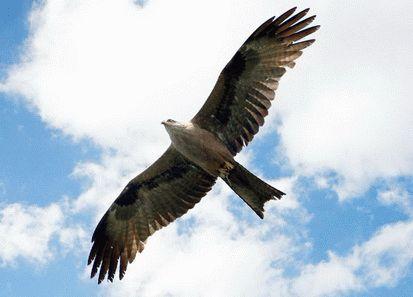 Хищные птицы Кубани