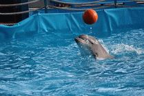 Дельфинарий - Новороссийск
