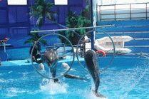 Дельфинарий на Суджукской косе в Новороссийске