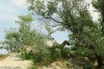 Верблюд на пляже Анапы