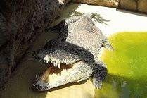 Анапа крокодиловая ферма фото
