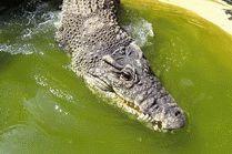 Крокодиловая ферма на курорте Анапа