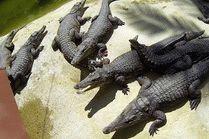 Крокодиловая ферма в городе-курорте Анапа