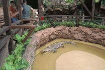 Крокодиловая ферма в Анапе
