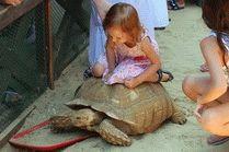 Черепаха в Анапе