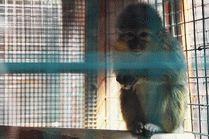 Мир животных Анапа