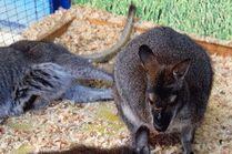 Зоопарк в Анапе