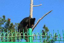 Cафари-парк - Геленджик