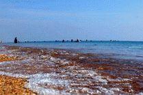 Фото - пляж в Благовещенской