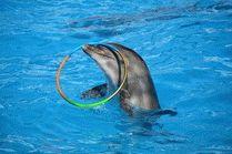 Дельфинарий в г. Геленджик