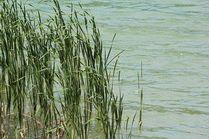 Берег озера Сукко
