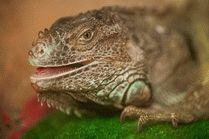 ст. Голубицкая крокодиловая ферма