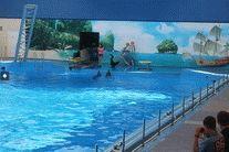 Дельфинарий в станице Голубицкая