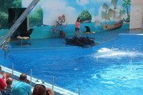 Дельфинарий Немо в ст. Голубицкая