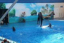 Дельфинарий Немо в Голубицкой