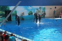 Дельфинарий в Голубицкой