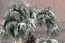 В Сочи выпал снег