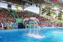 Дельфинарий в Парке Ривьера в Сочи