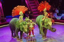 Цирк на курорте Сочи