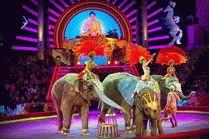 Цирк в городе Сочи