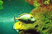 Обитатели Океанариума в Сочи
