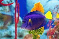Обитатели Сочинского океанариума