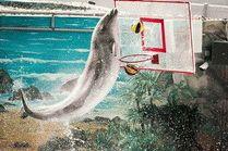 Дельфинарии в Сочи