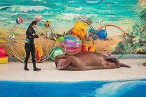 Сочинские дельфинарии