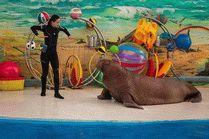 Сочинский Дельфинарий в парке Ривьера
