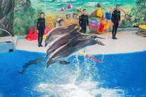 Большой Сочинский Дельфинарий