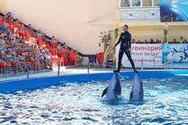 Дельфинарий Морская звезда в Лазаревском