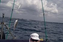 Морская рыбалка с катера в открытом море