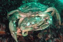 Подводный мир курорта Анапа