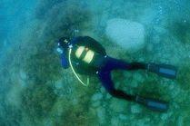Подводный мир в Анапе
