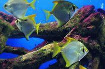 Океанариум Риф на курорте Анапа