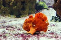 Рыба с руками в океанариуме в Анапе