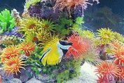 Океанариум «Риф»