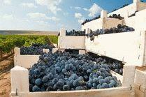 Экскурсии по кубанским винодельням