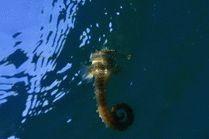 Морской коек над затонувшим Эльпидифором