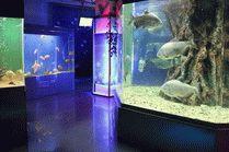 Океанариум Немо в Анапе