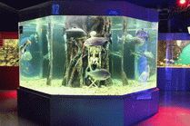 Анапский Океанариум