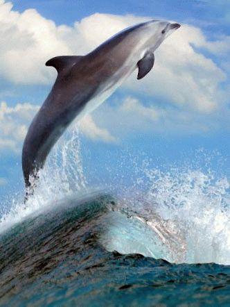 Дельфины в Волне