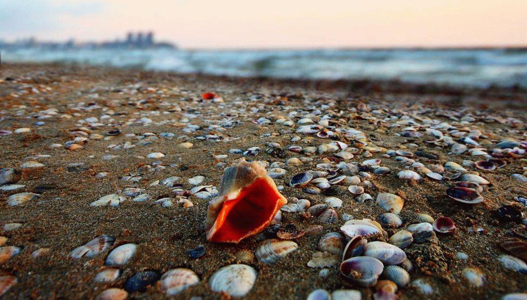 Моллюски Черного моря