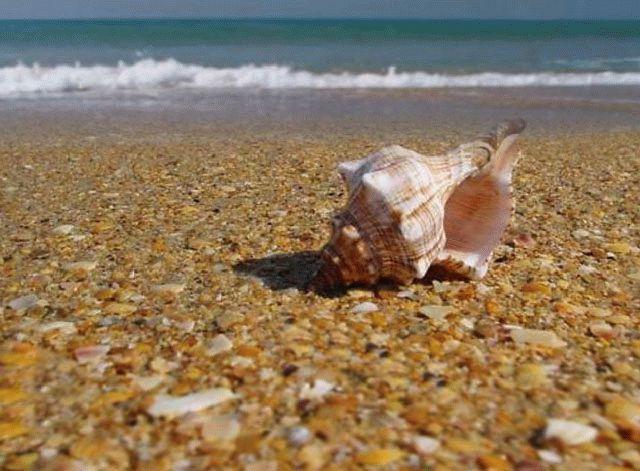 Отдых на Черном море - Анапа